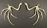 BONE SKELETAL WINGS PRE-ORDER
